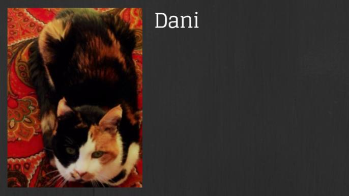 Banner Dani