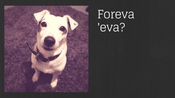Banner Forever 'Eva